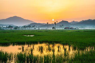 Langkawi Rice Paddy