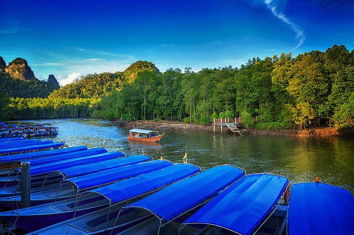 Mangrove in Malaysia