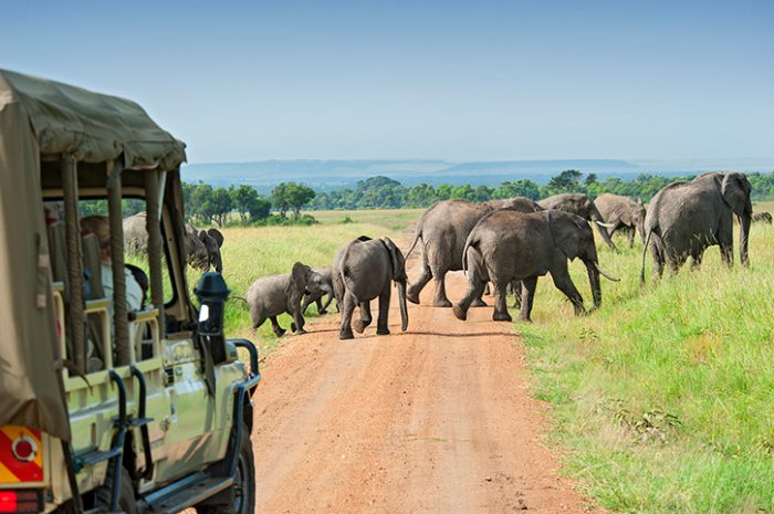 Elephants, Masai Mara