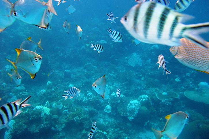 Marine Life in Redang