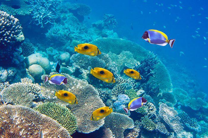 Marine Life, Mauritius