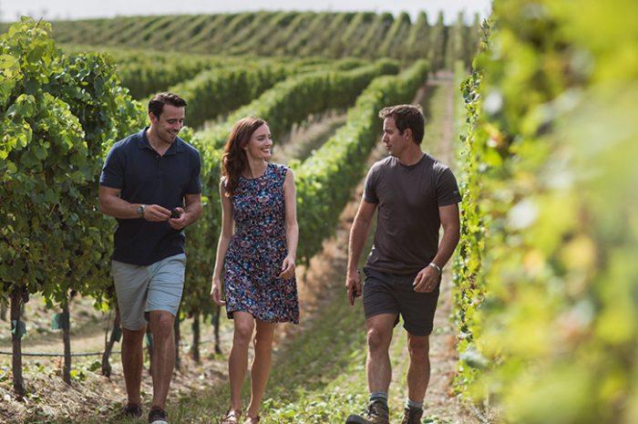 Marlborough Vineyard with Friends