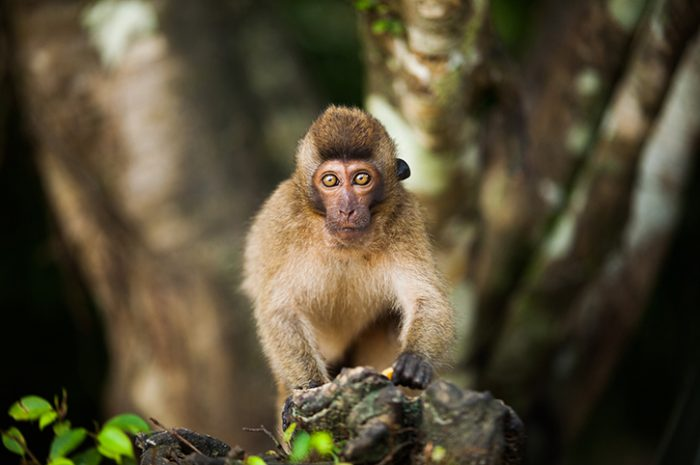 Monkey in Khao Sok National Park