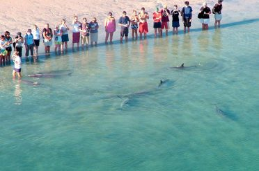 Monkey Mia Resort Dolphins