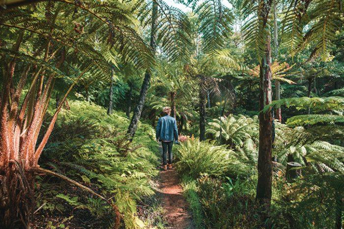 Mount Lofty, Adelaide Hills