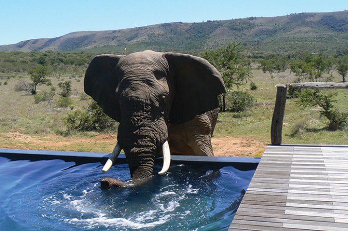 Msenge Bush Lodge Elephant Encounter