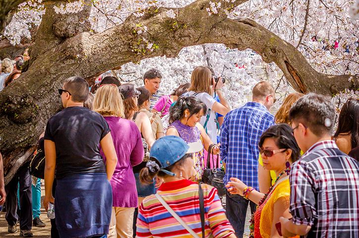 National Cherry Blossom Festival, Washington DC