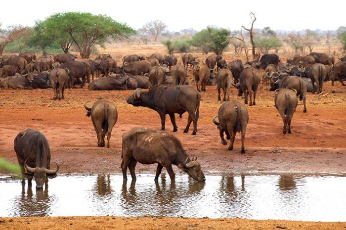 Ngutuni Safari Lodge Wildlife