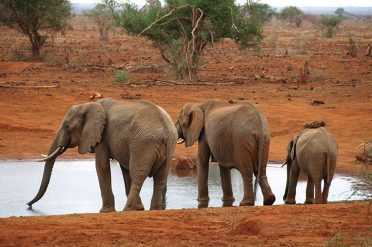 Ngutuni Lodge elephant at water hole