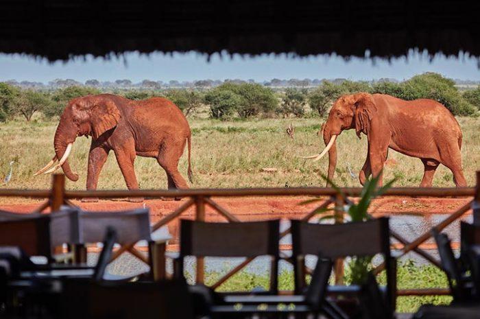 Ngutuni Lodge Elephants Passing By