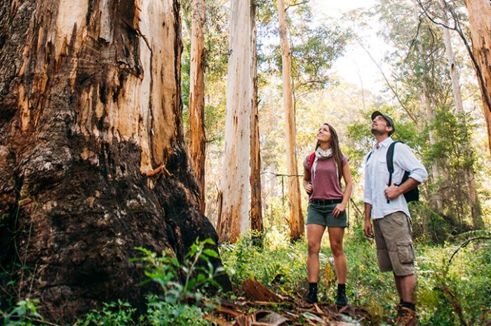 Northcliffe Forest, Western Australia