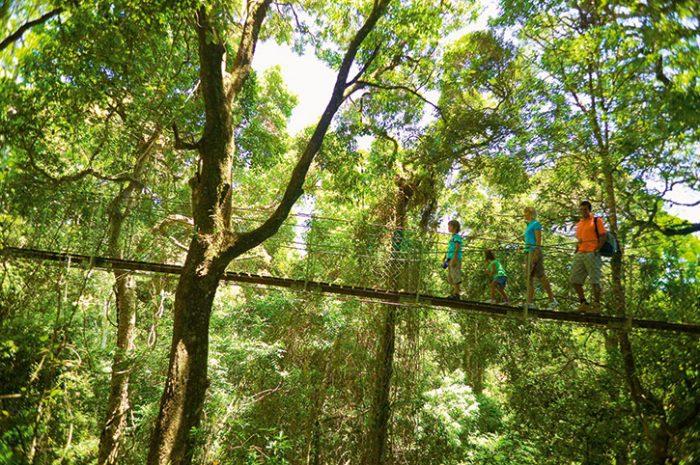 O'Reillys Rainforest Retreat Bridge