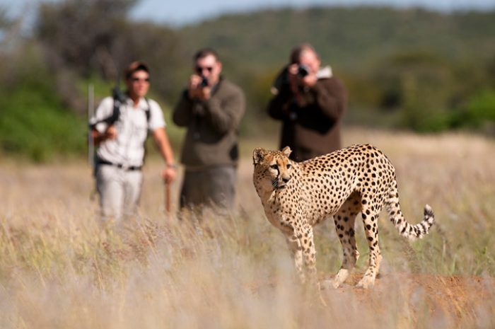 Okonjima Nature Reserve Cheetah Tracking
