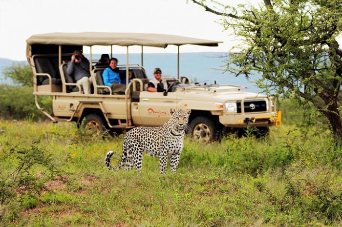Okonjima Plains Camp Game Drive