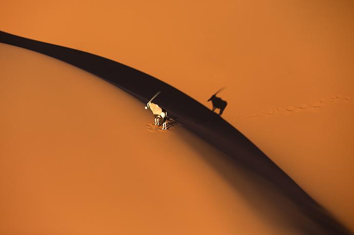 Oryx on Sossusvlei Dunes, Namibia