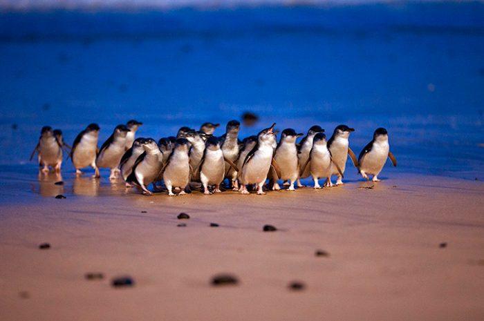 Phillip Island, Victoria