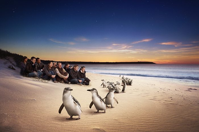 Phillip Island Penguins, Victoria