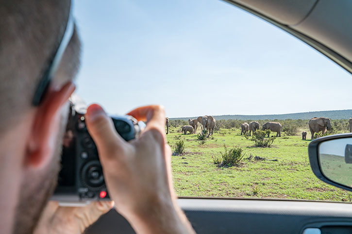 Photographing Elephants, South Africa
