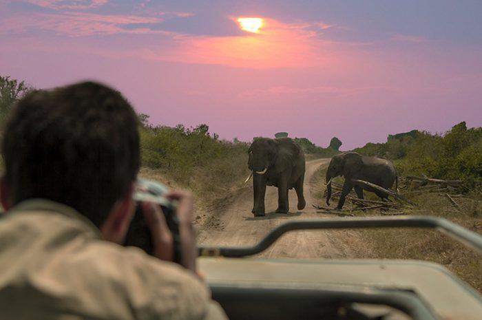 Safari, Queen Elizabeth National Park