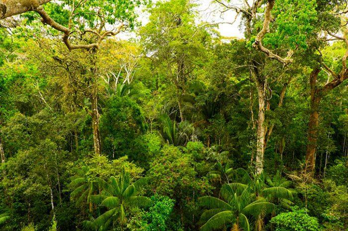 Rainforest, Borneo