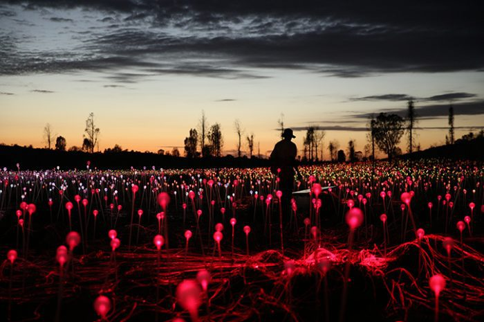 Red Stems, Field Of Light