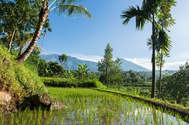 Rice Fields, Lombok