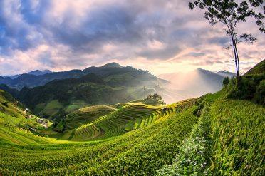 Rice-fields-Mu-Cang-Chai-Yen-Bai-Vietnam