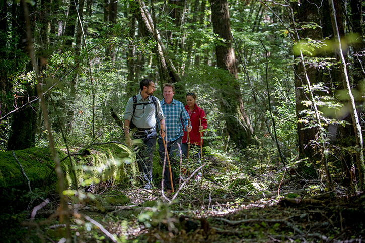Routeburn Track Beech Forest