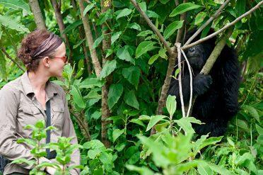 Rwanda gorilla with lady
