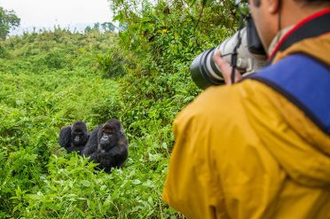 Photographing gorillas, Rwanda