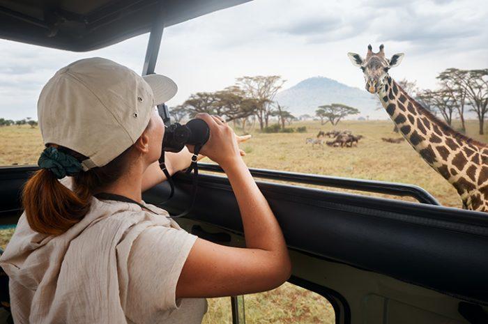 Safari, Serengeti