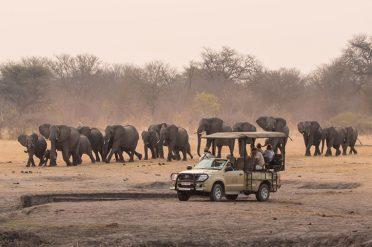 Safari, Zimbabwe