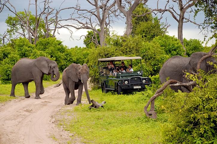 Safari in Chobe National Park, Botswana