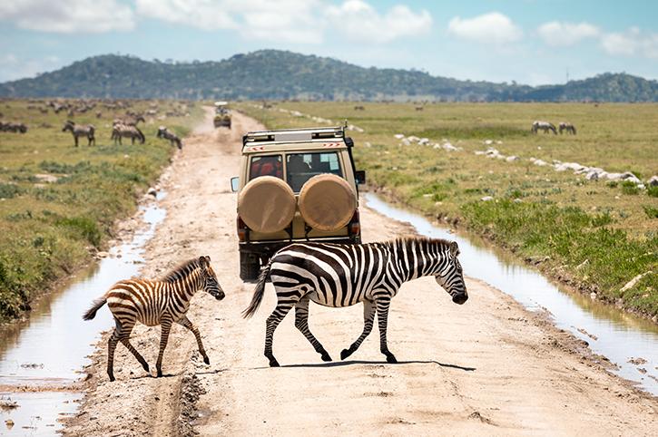 Safari, Serengeti National Park