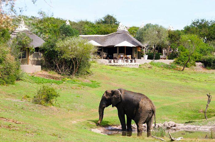 Safari Lodge Water Hole