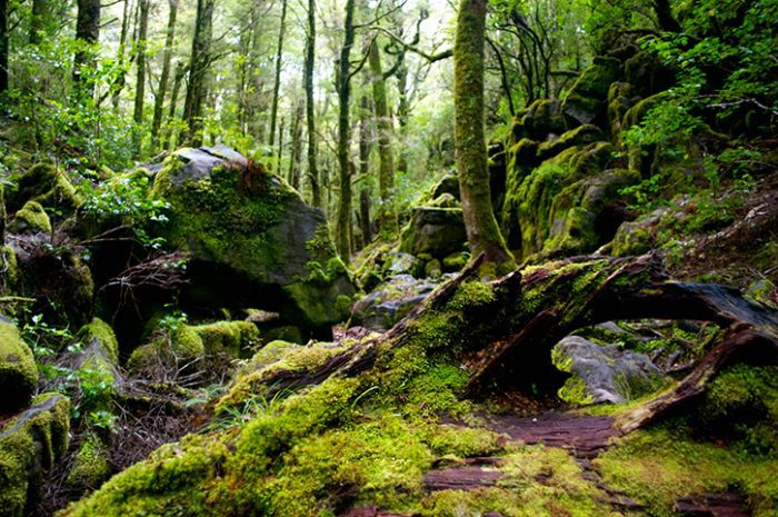 Safari Of The Scenes Forest