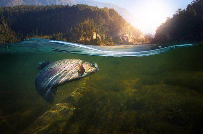 Salmon fishing, British Columbia