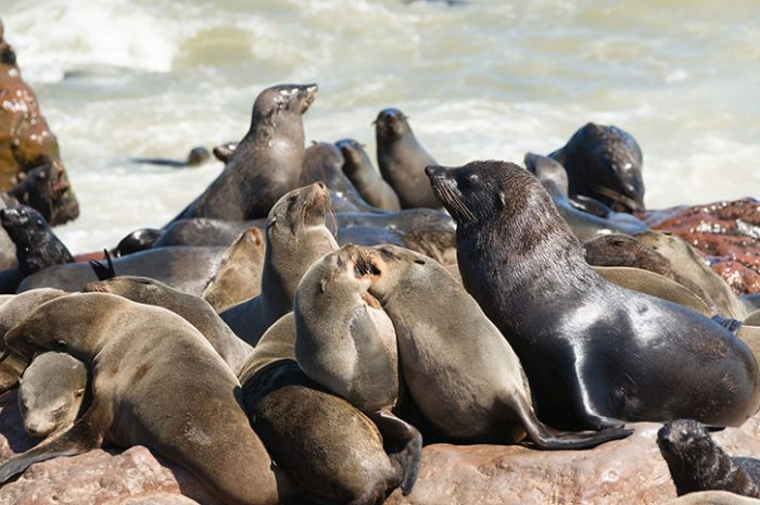 Seal colony, Namibia