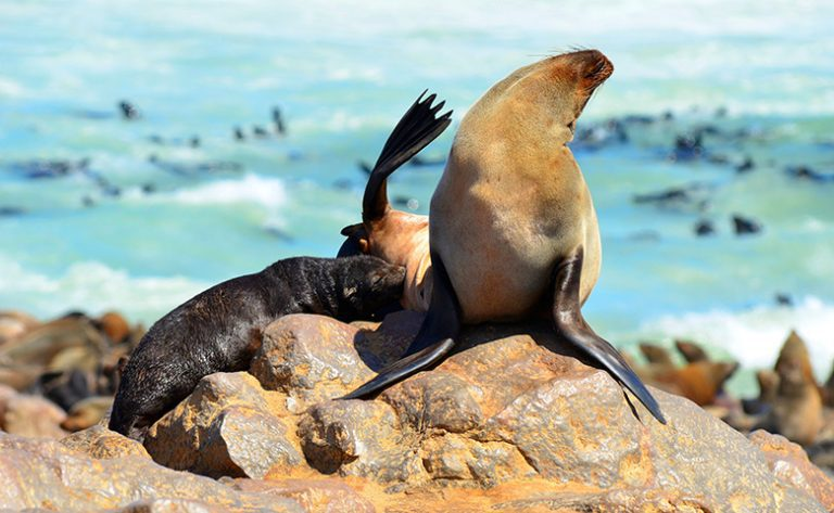 Seals Namibia