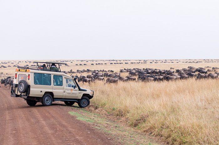 Serena Masai Mara game drive