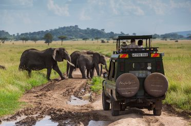 Serengeti Pioneer Camp game drive