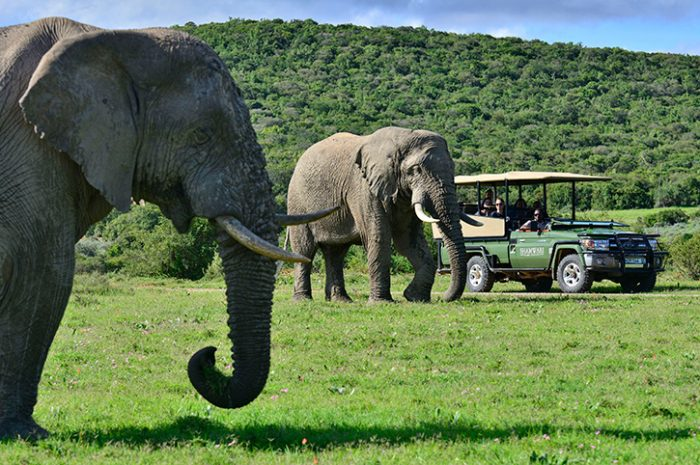 Shamwari Game Experiences