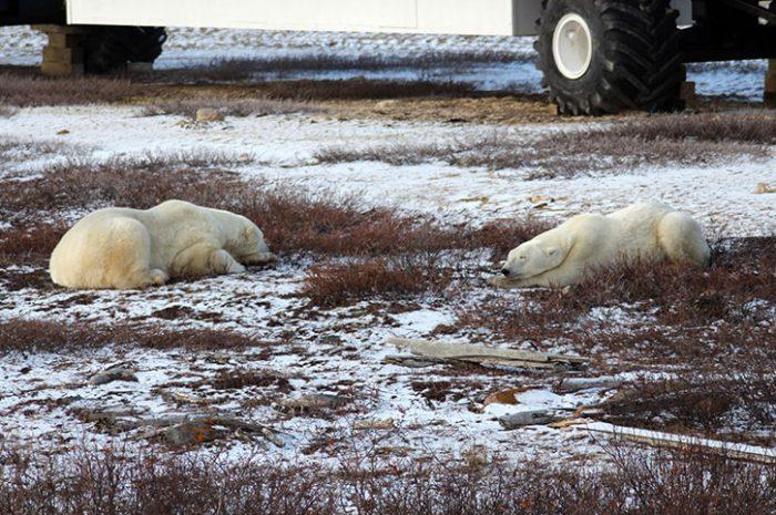 Sleeping Bears, Canada