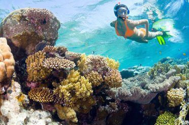 Snorkelling Above The Reefs, Mombasa