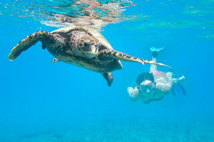Snorkelling, Seychelles