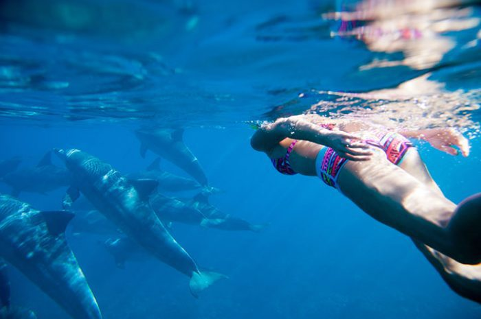 Snorkelling With Dolphins, Mauritius