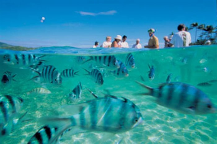 Snorkeling With Local Marine Life