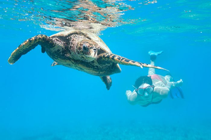 Snorkelling With Turtle, Seychelles
