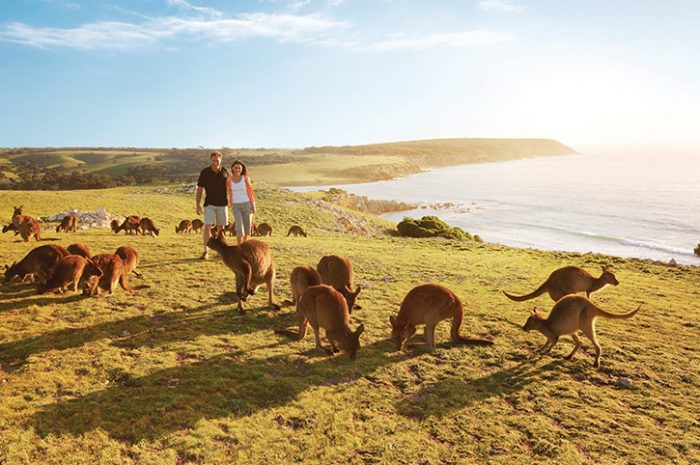 travel agent ke australia