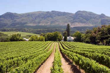 Stellenbosch Winery South Africa